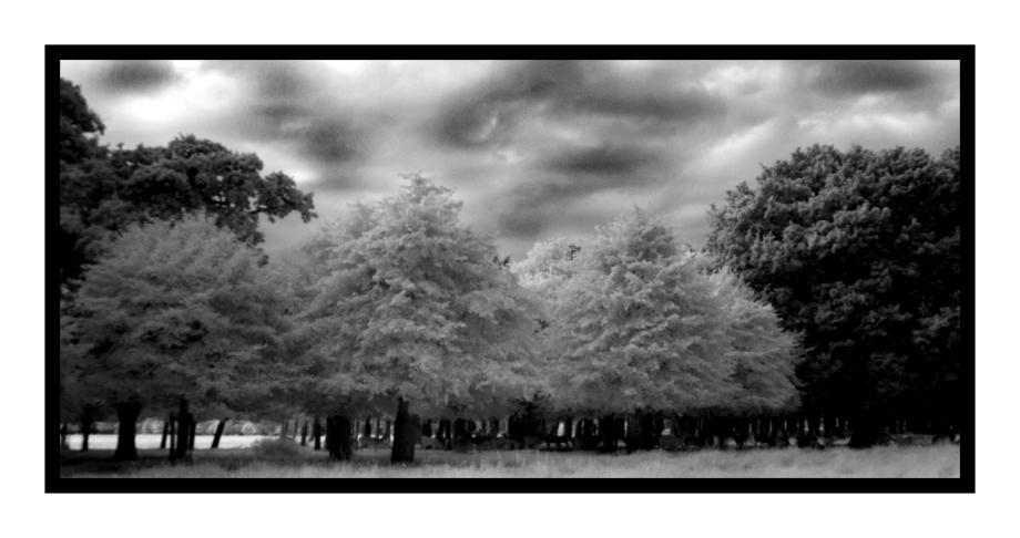 Phoenix Park Trees