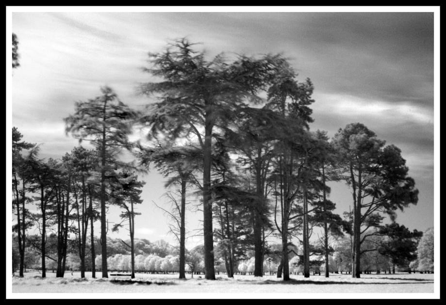Phoenix Park in Infra-Red