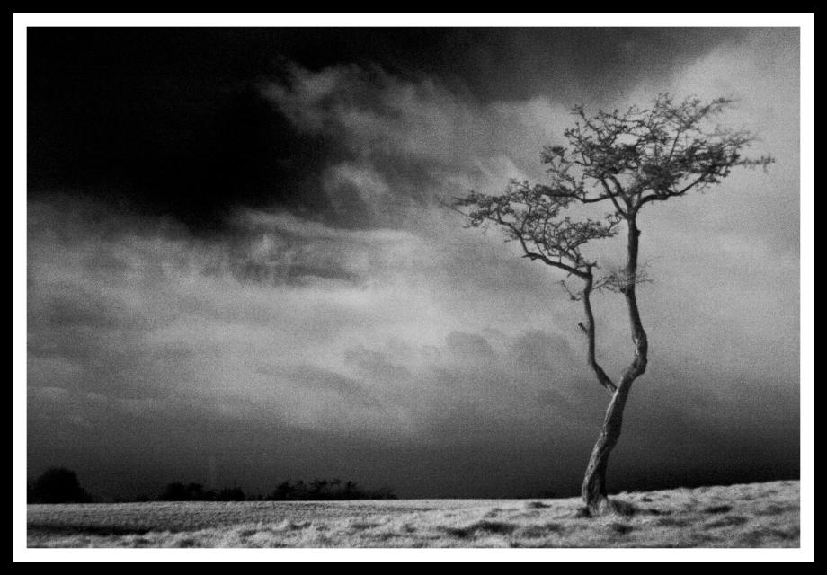 Infra Red Tree in the Phoenix Park