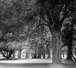 Avenue of trees in visitor centre