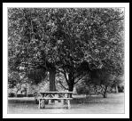 Tree and bench in Farmleigh