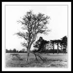 tree with broken branch and bridge