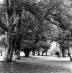 Trees on the grounds of the visitor centre nov 2011