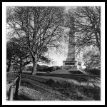 Wellington Monument with tree and fence