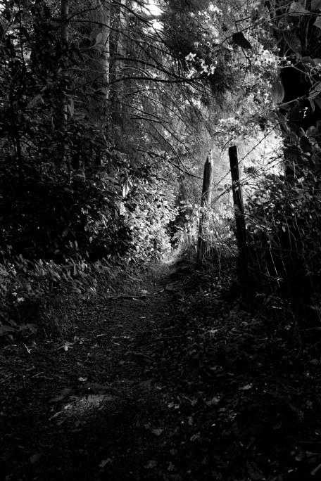 massey-woods-2015-1